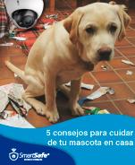 Cinco consejos para el cuidado de mascotas en casa