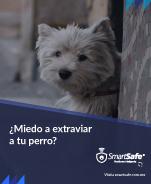 ¿Miedo a extraviar a tu mascota?