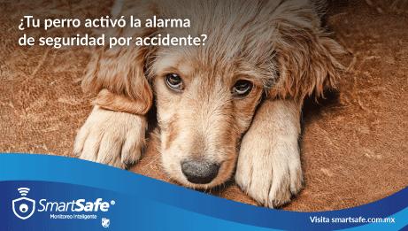¿Tu perro activó la alarma de seguridad por accidente?