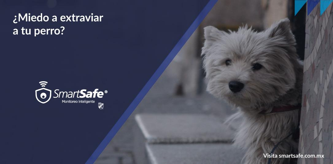 Cómo prevenir la pérdida o robo de tu mascota