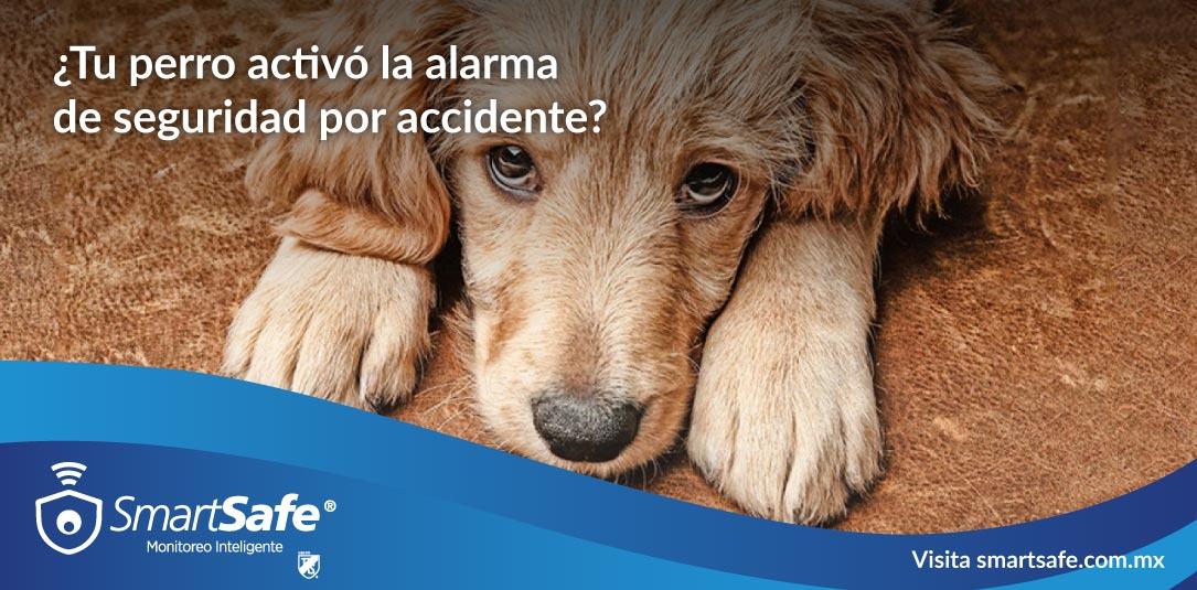 Consejos de alarmas para casas con mascotas
